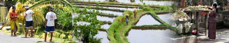 travailleur dans la région de Bali